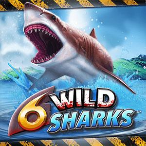 4theplayer 6 wild sharks