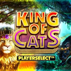 Bigtimegaming king of cats
